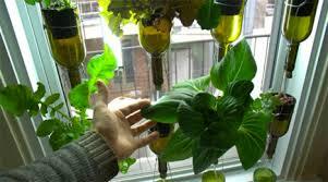 indoor window garden. grow food indoors wine bottle garden indoor window i