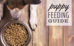 How Much Food Should I Feed My Puppy? | CanineJournal.com