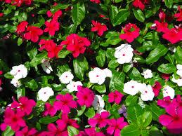 7月に撮影した花の写真2 花のフリー無料写真素材集 カフィネット