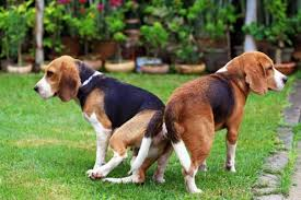 dogs and cats mating together. Perfect Cats Inside Dogs And Cats Mating Together D