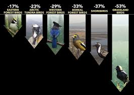 Vanishing More Than 1 In 4 Birds Has Disappeared In The