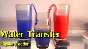 Fun Water Experiment Capillary Action