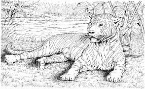 Hard Tiger Coloring Pages For Kids With Hard Animal Coloring Pages