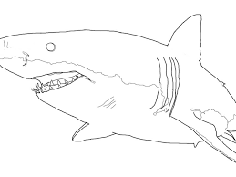 great white shark coloring pages great white shark coloring page printable coloring pages