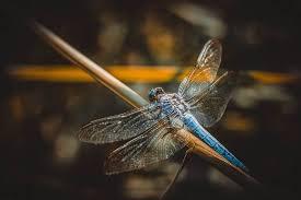 Posmrtné Vědomí Na Křídlech Vážky