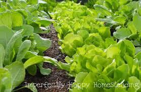 best spring vegetable garden ever