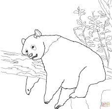 Small Picture Coloring Pages Giant Panda Is Eating Bamboo Coloring Page Free