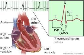 Ecg Chart Labeled Electrocardiogram Ekg Components And Intervals Healthlink Bc