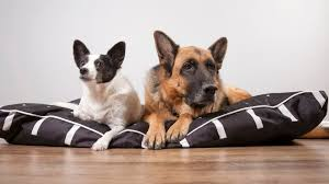 Why Dont Big Dogs Live As Long As Small Dogs Mental Floss