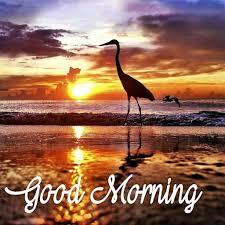 good morning beautiful scenery