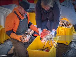 Tasmanian King Crab Being Unloaded ...