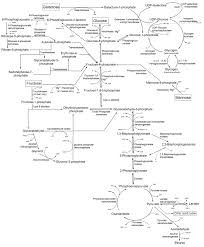 Carbohydrate Metabolism Chart Gluconeogenesis Wikipedia