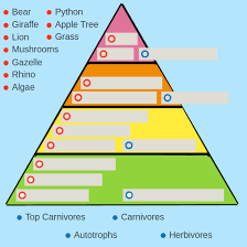 Ecosystem Pyramid Chart Food Chains And Food Webs Advanced Ck 12 Foundation