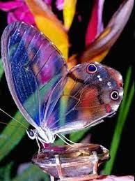 Recuerda qué la magia es tuya... - Mariposas de mil colores   Facebook