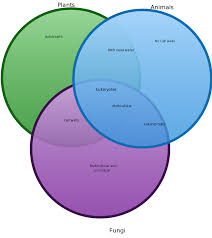 Venn Diagram Plants Fungal Cell Venn Diagram Manual E Books