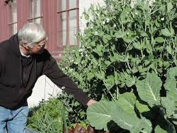 growing fresh vegies winter gardens successful in southern arizona