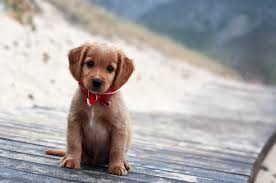 Download 2560x1700 Puppy, Cute ...