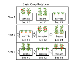 Crop Rotation Chart Crop Rotation Systems For Annual Vegetables Deep Green