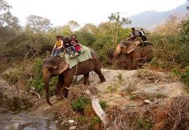 essay on wildlife tourism in verbs homework ks essay on wildlife tourism in