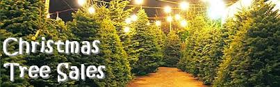 a Christmas Tree sales lot, with rows of green trees on either side a. \u0027 Queen Angels Catholic Parish Chicago: Sales 2016