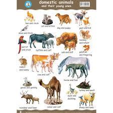 Pin By Julie Reinecke On Ot Farm Animals List Animals