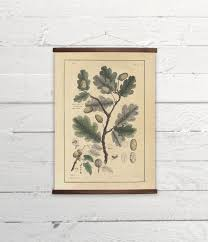 Oak Tree Size Chart Beautiful Oak Tree Branch With Leaves And Acorn Canvas
