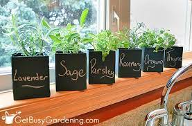 how to grow herbs indoors the ultimate