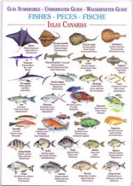 Lanzarote Fish Chart Fishes Waterproof Field Guide