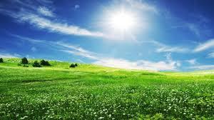 green grass field. Nature, Grass, Graphics, Sun, Sunshine Green Grass Field