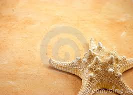 how to write an essay introduction for essay on starfish many interesting forms of sea life can be found in the reefs