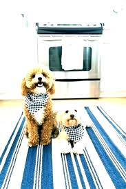 dog friendly area rugs best pet luxury rug durable amazing frie material