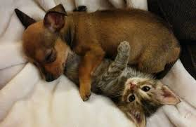 puppy and kitten. Contemporary Puppy Inside Puppy And Kitten