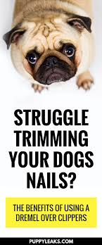remended reading 5 ways to stop your dogs nail