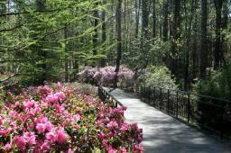 callaway gardens in georgia. online tour of callaway gardens in georgia l