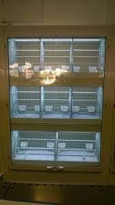 ILA - Bird display Exhibitors Ila Europe for birds are... | Facebook