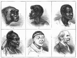 Ape Evolution Chart Nineteenth Century Evolution Chart Facing History And