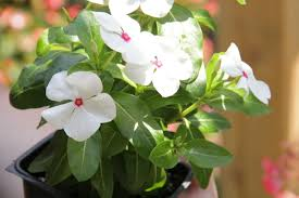small plants for office. Small Office Plant. Examples Of Dry Plants: Plant O Plants For