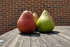 What month do pears mature