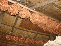 Hasil gambar untuk menyimpan bawang bombay digantung