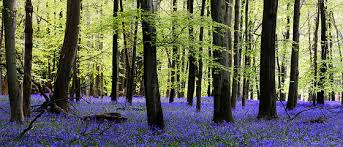 win acirc pound in an essay competition to protect english forests win acircpound5 000 in an essay competition to protect english forests