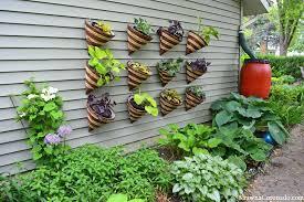 photo of attractive indoor wall garden freestanding vertical up