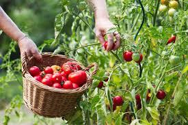 location for a vegetable garden