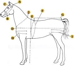Size Chart Chimacum Tack