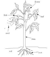 indoor clean air houseplants indoor find image about wiring Houseplants For Clean Air nasa houseplants healthy furthermore search vectors further house plants help air quality additionally house plants good houseplants for cleaner air