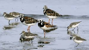 Bird Population In North America Has Plummeted In Past 50