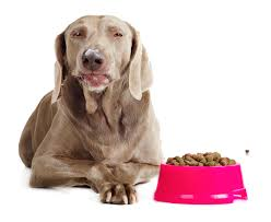 8 Best Dog Foods For The Weimaraner Diet Simply For Dogs
