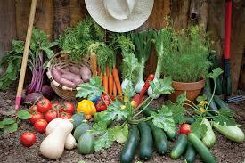 small organic vegetable garden