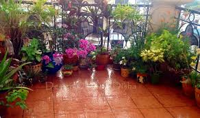 Small Picture Design Decor Disha My Balcony Garden Makeover