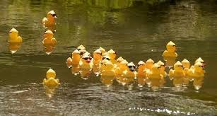 Image result for duck and goose race