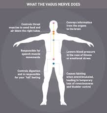 Reflexology Chart Vagus Nerve Vagus Nerve Stimulation Infographic Video Instructions